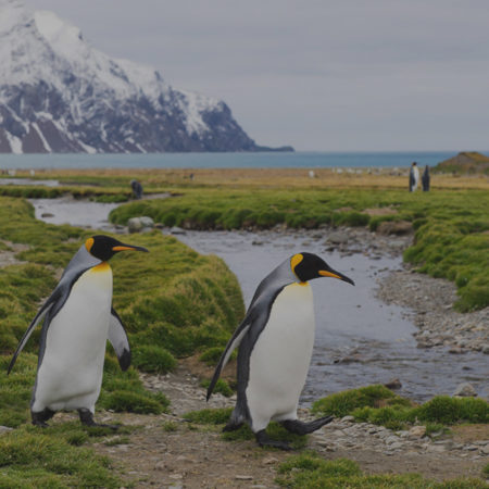 ANTARCTICA CRUISE 2022 – SOLD OUT