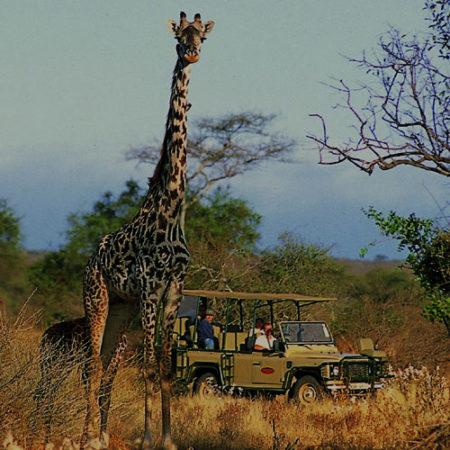 AFRICA SAFARI & TOUR (DECEMBER)